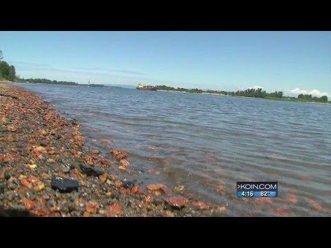 Sauvie Island wants protection from Swan Island
