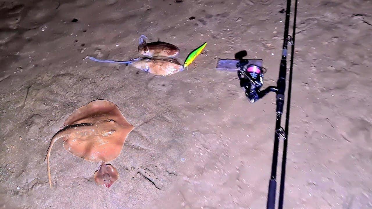 Đi bắt cá đuối và mực nang - Phần 1