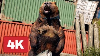 8 Minutes of Far Cry 5 Bear Companion Gameplay on PS4 Pro (4K)