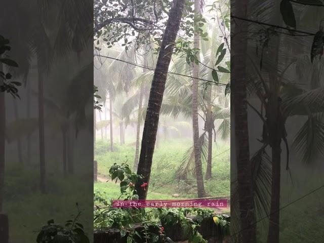 മഴ .. കട്ടൻ ചായ .. കൺട്രി മ്യൂസിക് 👌 In the early morning rain ...