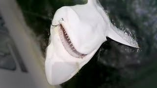 SHARK FISHING TIPS - HOW TO CATCH SHARKS