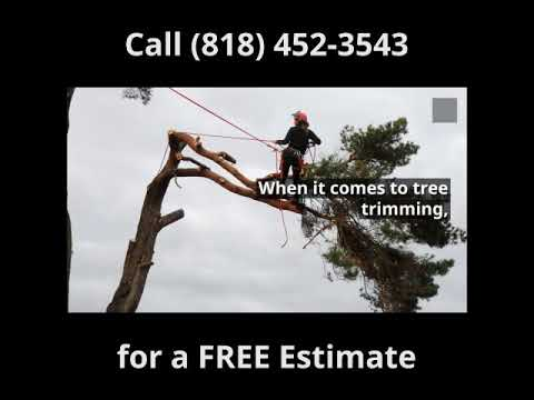 Arlington Heights Tree Trimming and Stump Removal 818 452 3543