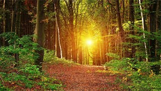 Download 3 Hours Music, No Loops. Inner Peace, Relaxing, Soothing Music Mp3 and Videos