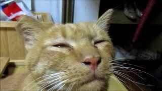人間に撫でられる事に快感を覚えた野良猫の表情がおじさんっぽい thumbnail