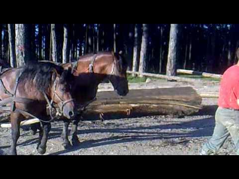 caii lui fane sacele 1