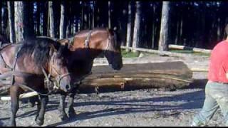 Repeat youtube video caii lui fane sacele 1