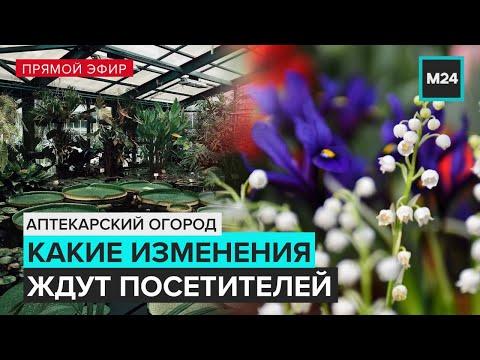 Аптекарский огород | Прямая трансляция - Москва 24