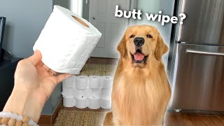My Dog Reacts to the Toilet Paper Challenge