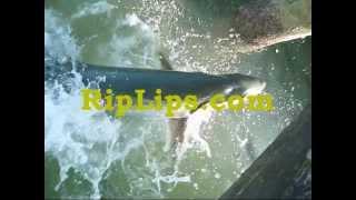 Tarpon Fly Fishing In The Lower Keys