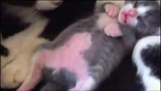 Милый спящий котенок