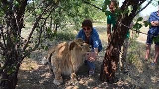 Селфи с львом Олежкой мечта гостьи из Флориды ! Тайган .Крым