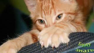 Ужасы бедных кошек... Кому мешают Когти7