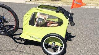 Siberian Husky rides in a Schwinn Dog Trailer!