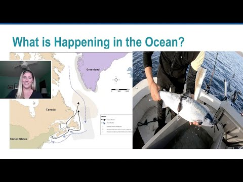 NOAA Live! Webinar 13:  Leaping For Atlantic Salmon: Protecting Endangered Species