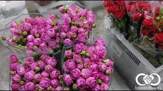 Infinite Flowers | Цветы оптом(, 2017-06-16T19:36:51.000Z)