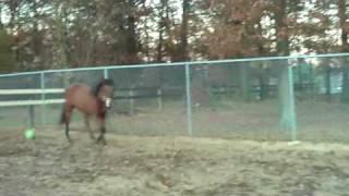 My horse, pete