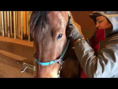 Barn Work - a Direct Cinema Documentary
