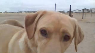 Dog Park Denver - Rover's Run, Highlands Ranch, Co Off Leash Park