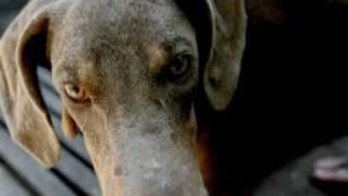 Adopt-a-pet: Dobie Haven, Inc.