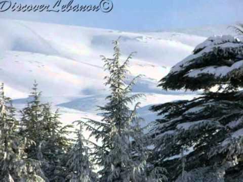 al arz - Lebanon cedar forest