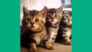Лучшие Кошачьи Позы   Сборник  25 минут