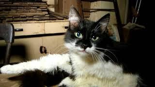 Спасение кошек и их хозяйки