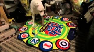 dog goes crazy super d diving score haul the free market part 2