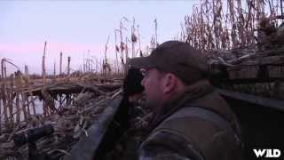 Duck Hunting With A Labrador Retriever‎