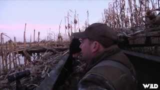 Duck Hunting With A Labrador Retriever