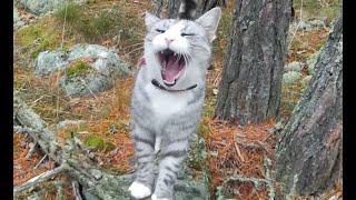 Katt Sir Carl i klättertagen i hackspett trädet :-)