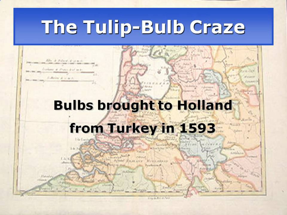 Image result for tulip mania, 1637