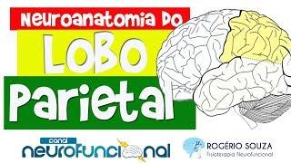 LOBO PARIETAL (Neuroanatomia Funcional do Córtex / Telencéfalo) - Rogério Souza