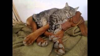 Очаровательная дружба кошек с собаками
