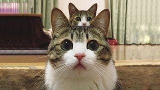 「猫かわいい」 すごくかわいい子猫 - 最も面白い猫の映画 #273 https:/...