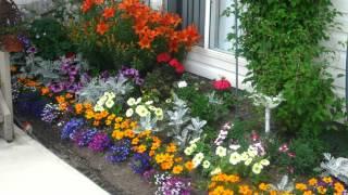 подари себе хорошее настроение - посади цветы у подъезда