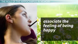 Hippocampus  Definition, Function   Location   Video   Lesson Transcript   Study com