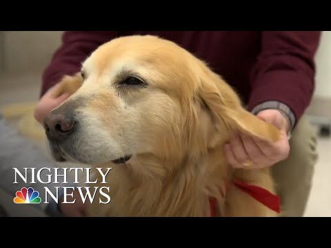 Sweet-Story-Behind-Super-Bowl-Ad-About-Dog's-Cancer-Journey-NBC-Nightly-News