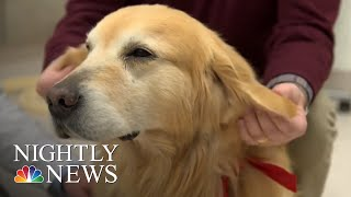 sweet-story-behind-super-bowl-ad-about-dog-s-cancer-journey-nbc-nightly-news