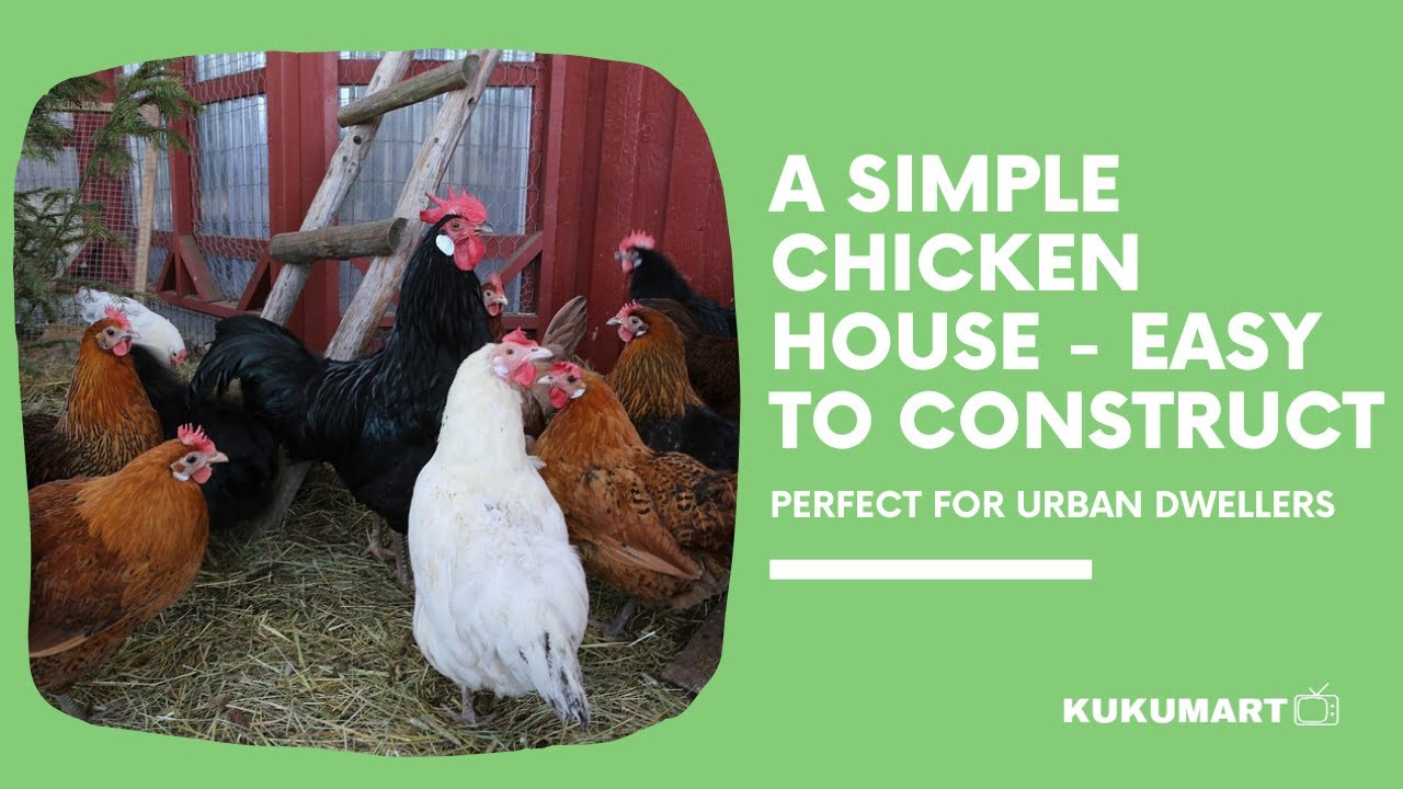 How to Construct a Chicken House - Step By Step Guide