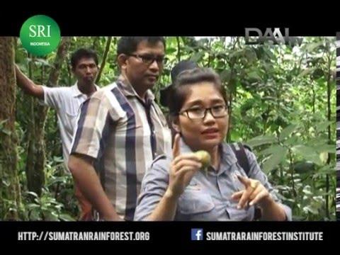 SRI: Tapanuli's Orangutan Protection