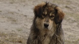 Бездомные собака и щенок ищут хозяев