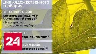 Летнее тепло в ноябрьской Москве: куда пойти в выходные - Россия 24
