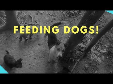 Dog Eating Food Outside | My First time feeding Dogs Outside ★★★