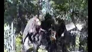Gnilaya Botva / Гнилая Ботва / Rotten Leaves