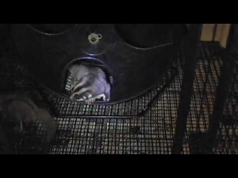 Cheap sugar glider Nail Trimmer exercise wheel