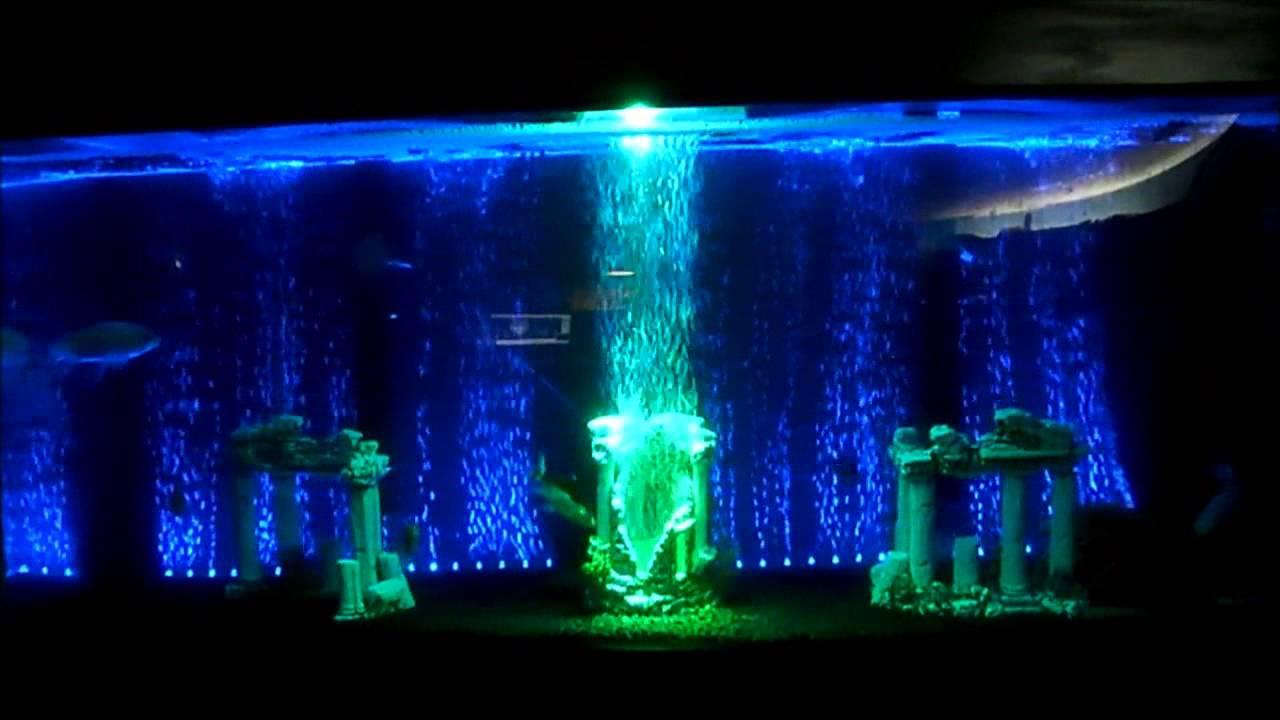 50 Gallon Aquarium Youtube