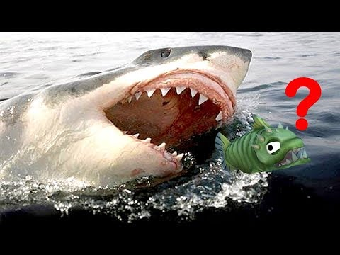 ATTAQU PAR LE GRAND REQUIN BLANC !   Feed and Grow: Fish !