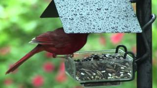Wild Birds Unlimited - Sidedish™ Feeder