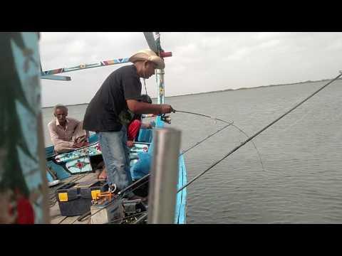 2017 Nice fish Dentex (Dathee) caught in Mangroves Fishing Karachi Pakistan