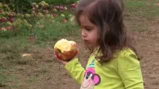 Apple Picking at Battleview Orchards - 2010